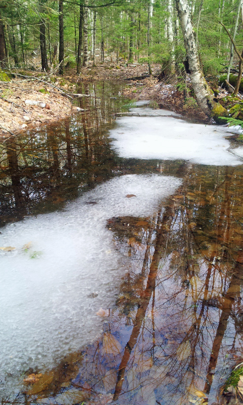 Vernal Pool w:Ice