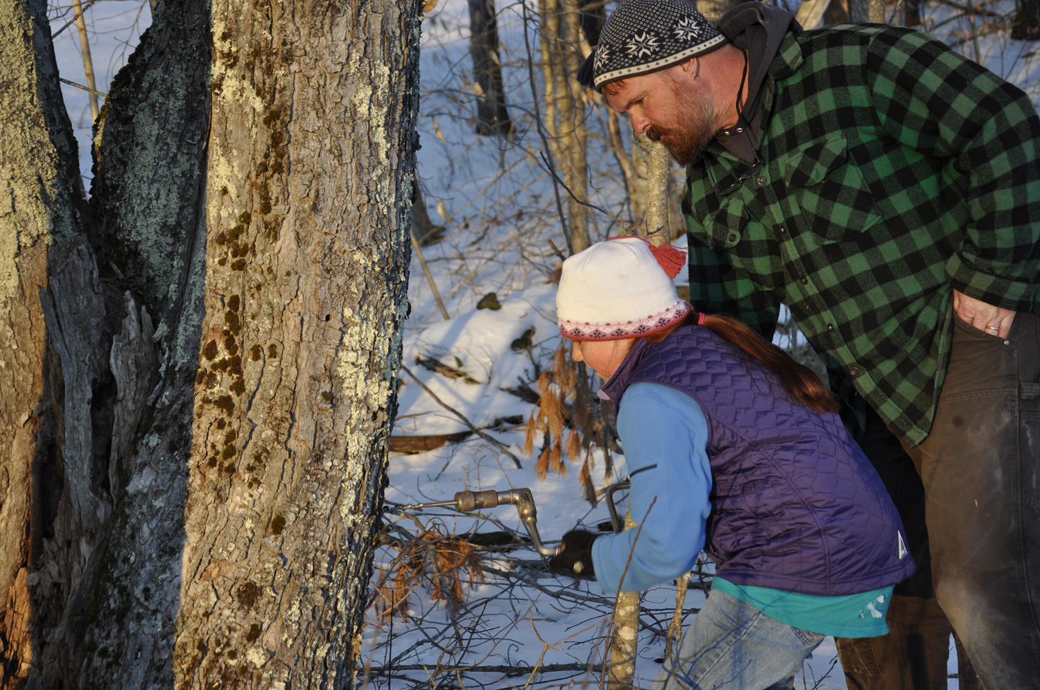 Maine windjammers tapping maple trees